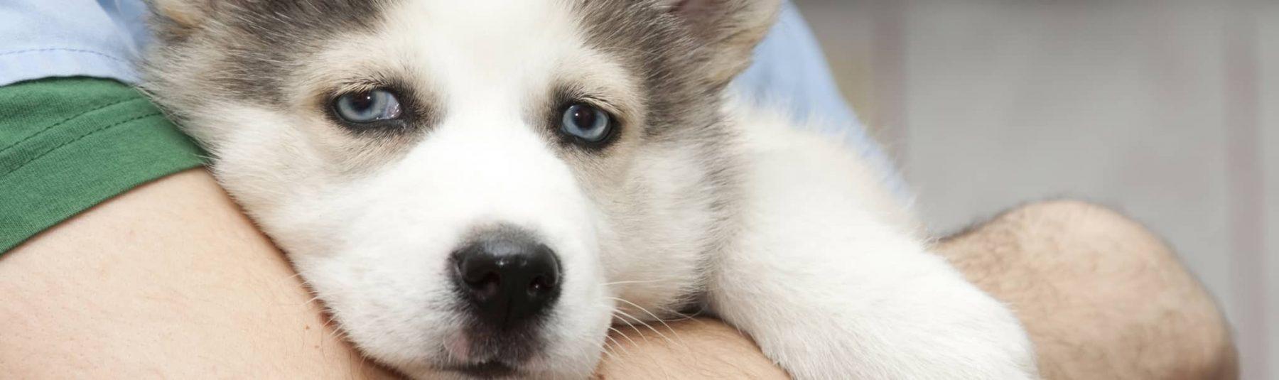 heartwormtest-service-dog