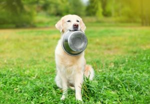 dog holding food bowl