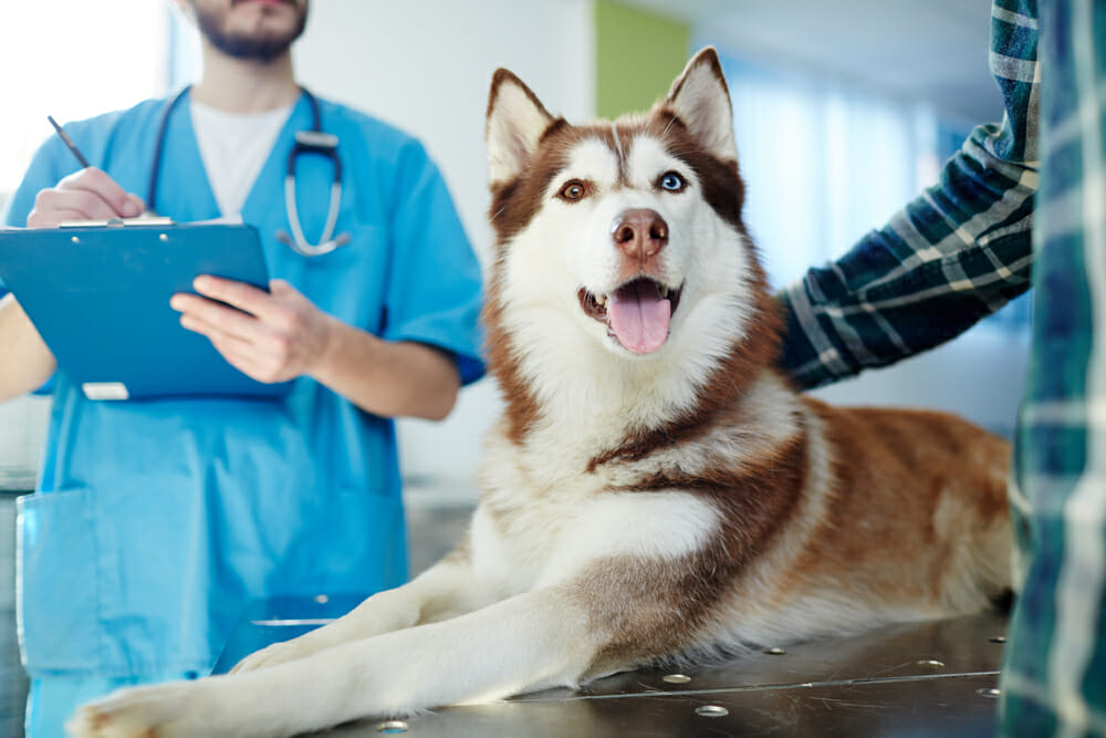 4Paws Veterinary 24-Hour Emergency Pet Hospital & Halifax House Calls