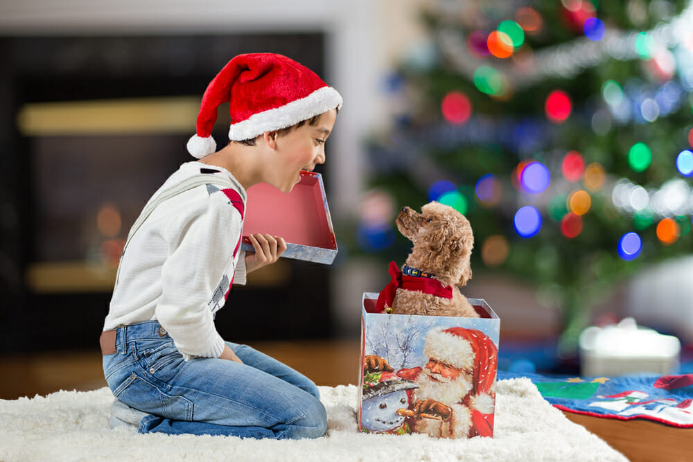 child opening box with puppy inside